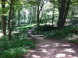 loantaka brook reservation trail new jersey alltrails com Loantaka Park Trail Map Loantaka Park Trail Map #33 114 Loantaka Way Madison NJ