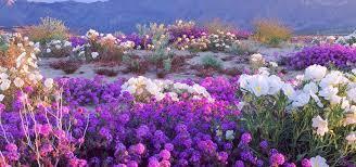 Image result for Anza-Borrego Desert State Park