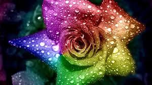 3d Wallpaper Rose Hd