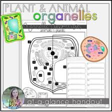 Plant Comparison Chart Plant And Animal Cell Organelle Comparison With Chart