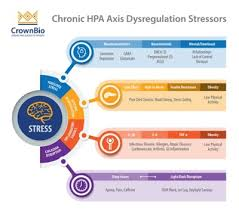 Hpa Axis Stress Keeping You Up At Night Blame Your Hpa Axis