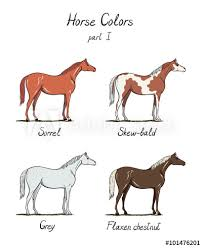 Foal Color Chart Set Of Horse Color Chart On White Equine Coat Colors With