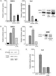 the ets transcription factor mef is a candidate tumor suppressor figure