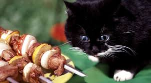 Image result for cats celebrating july 4th