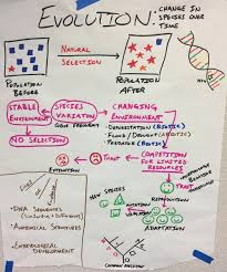Hs Natural Selection And Evolution Anchor Charts The