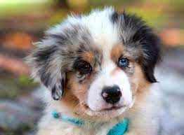 when do puppies eyes change color