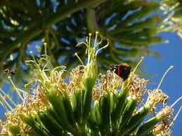 """Résultat de recherche d'images pour """"l'agave"""""""