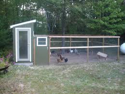 Charcoal  Chickens U003d Healthy Backyard Flock  BackyardBackyard Chicken Blog