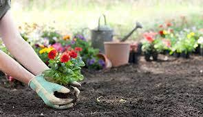 a flower bed and start a flower garden