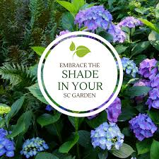 embrace the shade in your sc garden