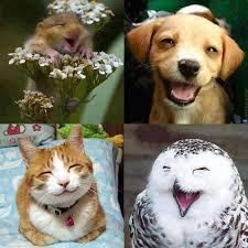 Happy animals [Amazing Photo of the Day] | dotTech