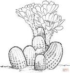 Картинка раскраска кактус
