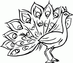Small Picture Peacock Coloring Page Pictures peacocks Pinterest Peacocks