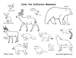 Small Picture 69 best Color Animals images on Pinterest Animal coloring pages