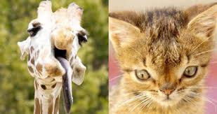 Image of: Funny All Thats Interesting Animals With Down Syndrome Debunking This Mistaken Trend