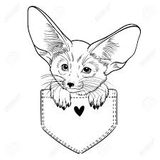 ポケットの中のかわいい動物フェネック キツネ子供塗り絵の線形の図t