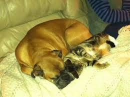 dog and cat sleeping together. Brilliant Sleeping Ameliau0027s  To Dog And Cat Sleeping Together N