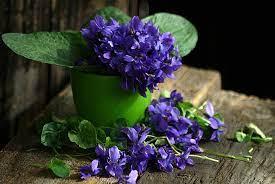รูปภาพ : ปลูก, สีม่วง, สมุนไพร, สีน้ำเงิน, ยังมีชีวิตอยู่, ไฮเดรนเยีย,  ดอกไม้ป่า, 1, ผักตบชวา, ดอกไม้ฤดูใบไม้ผลิ, ไวโอลิน, การถ่ายภาพมาโคร,  พืชดอก, ช่อดอก, Hydrangeaceae, โรงงานที่ดิน, ครอบครัวม่วง,  ภาษาอังกฤษลาเวนเดอร์ 2907x1946 - - 1388774 - ภาพ สวย ...