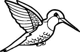 Small Picture Collection of Solutions Hummingbird Coloring Pages To Print For