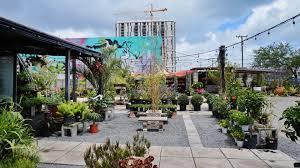hami in miami cinco de mayo la pollita tucked away in the delightfully green luscious midtown garden center