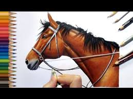 horse drawing in color. Interesting Drawing Colored Pencil Drawing Of A Brown Horse  Speed Draw  Jasmina Susak  YouTube In Color N