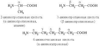 Реферат Аминокислоты их классификация com Банк  Аминокислоты их классификация