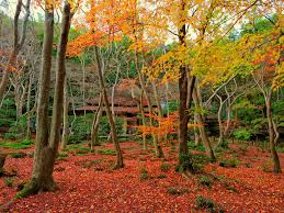 10 Best Autumn Leaves Spots in Kyoto 2021 - Japan Web Magazine