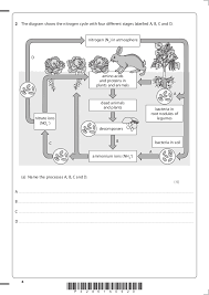 Blank Nitrogen Cycle Diagram - Wiring Library •