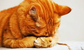 removing urine or vomit stains