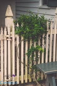 best gates and fences images colonial  love this fence