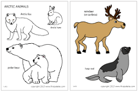 Small Picture Polar Animals Printable Templates Coloring Pages