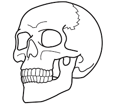 Human Skeleton Coloring Pages At Getdrawingscom Free For Personal