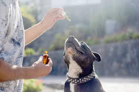 5 Benefits of CBD for Pets