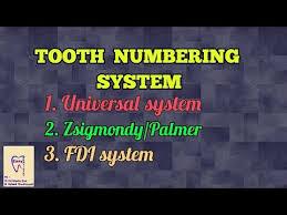 Videos Matching Fdi World Dental Federation Notation Revolvy
