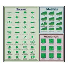 Chart Of Leaf Morphology Shape Venation Margin