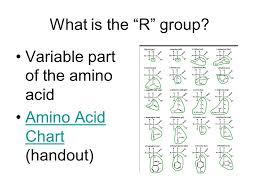 Amino Acid Chart Simple Chapter 44 Proteins Purpose Mostly For Structure Skin Muscle