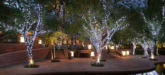 how to wrap outdoor trees with lights like a pro