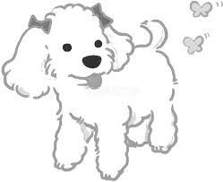 手書きトイプードル かわいい白黒の犬イラスト無料82862 素材good