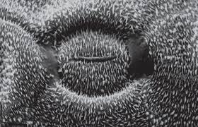 Superhydrophobic Hierarchically Structured Surfaces In Biology