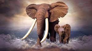 Elephant Wallpaper HD