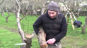 A Practical Beginners Guide To Fruit Tree Pruning  Permaculture Pruning Fruit Trees Video