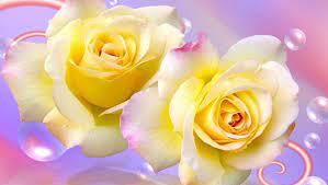 Free Yellow Rose Wallpapers - Wallpaper ...