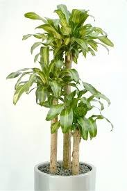 office plants no light. Superior Indoor Office Plants No Light Offices Are Brightly Lit, But That Doesnu0027t Mean Arenu0027t An Option For Your Workplace. G