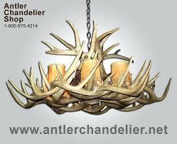 antler chandelier net real antler white tail single tier chandelier wtsngl antler chandeliernet