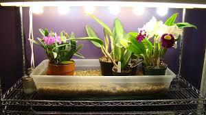 growing orchids under lights i wwworchidsmadeeasycom artificial lighting set