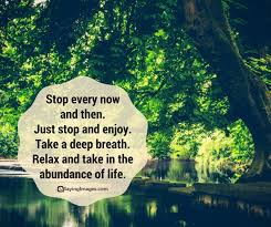 Enjoy The Beauty Of Nature Quotes