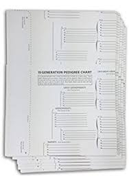 blank pedigree chart 4 generation amazon com treeseek 15 generation pedigree chart 10 pack blank