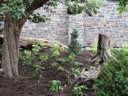 Small Picture In bloom at the Calgary Zoo Reawakening a woodland garden