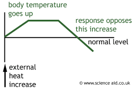 homeostasis negative feedback body temperature blood glucose  negative feedback