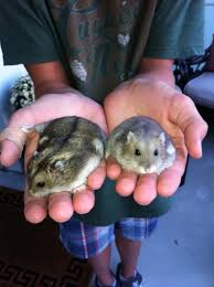 Image result for hand in hamster cage